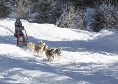 Катание на собачьих упряжках, Буковель