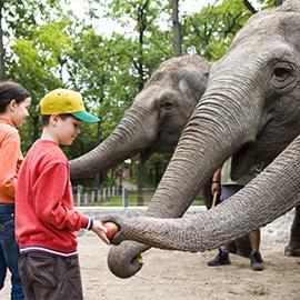 Зоопарк ZOO SOSTO, Ньиредьхаза