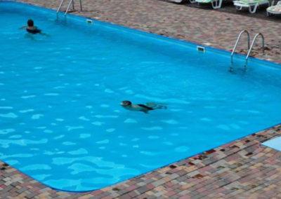 Летний бассейн. Отдых в коттеджах в горах Закарпатья