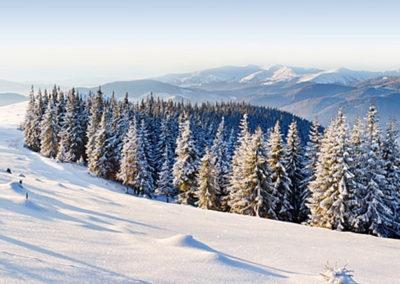 Окрестности коттеджей в горах Закарпатья