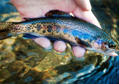 Рыбалка. Лето в Закарпатье